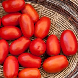 SanMarzano_Tomatoes_DOP
