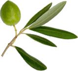 flora-foods_veg3