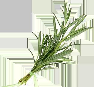 flora-foods_veg4-1